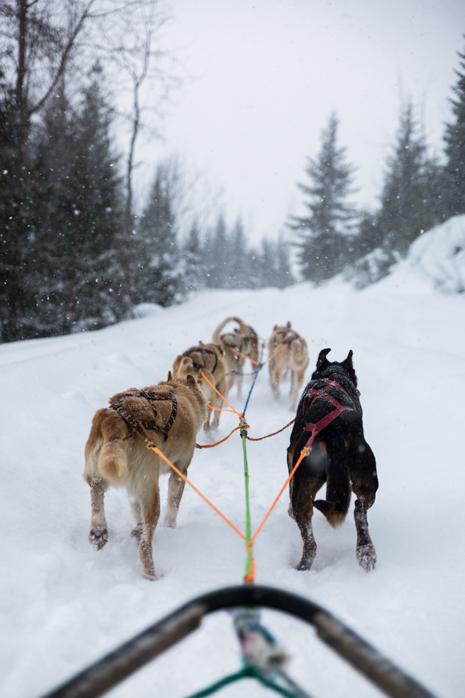 Revelstoke dog sledding