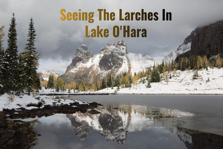 Larches Lake OHara Yoho