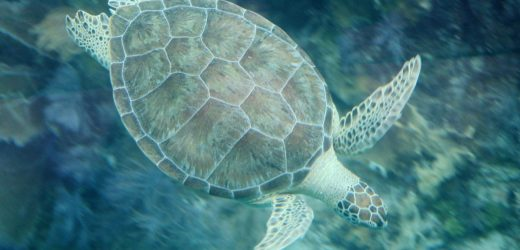 Incredible animals you can see in Riviera Maya