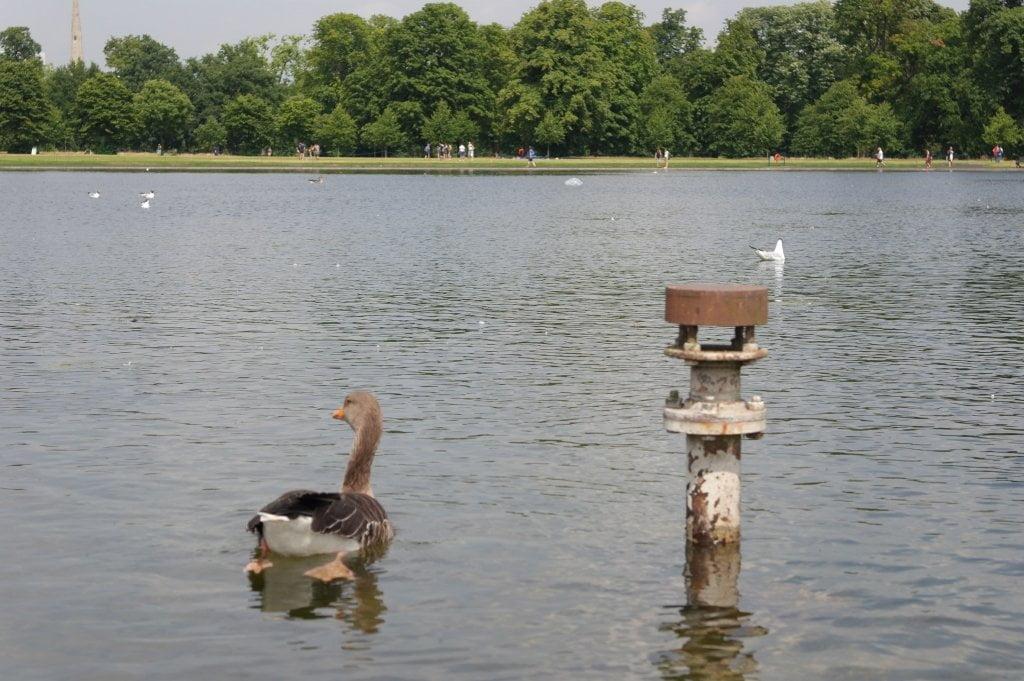 Geese, Round Pond, Kensington Gardens, Hyde Park (18)