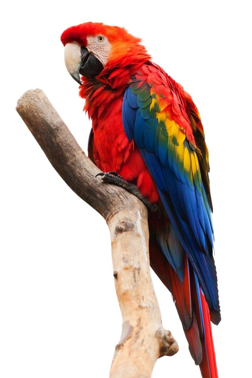 parrots photo