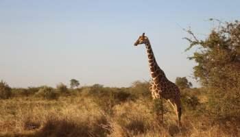 eb3db70721f7073ecd0b470de7444e90fe76e7d419b6144191f6c2_1280_wildlife-safari-africa