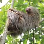 Costa Rica – A Wildlife Wonderland