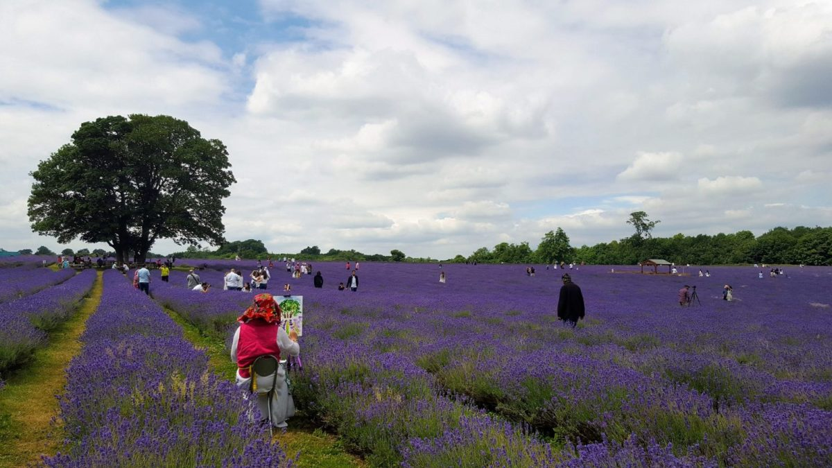 Painter at Mayfield Lavender Farm