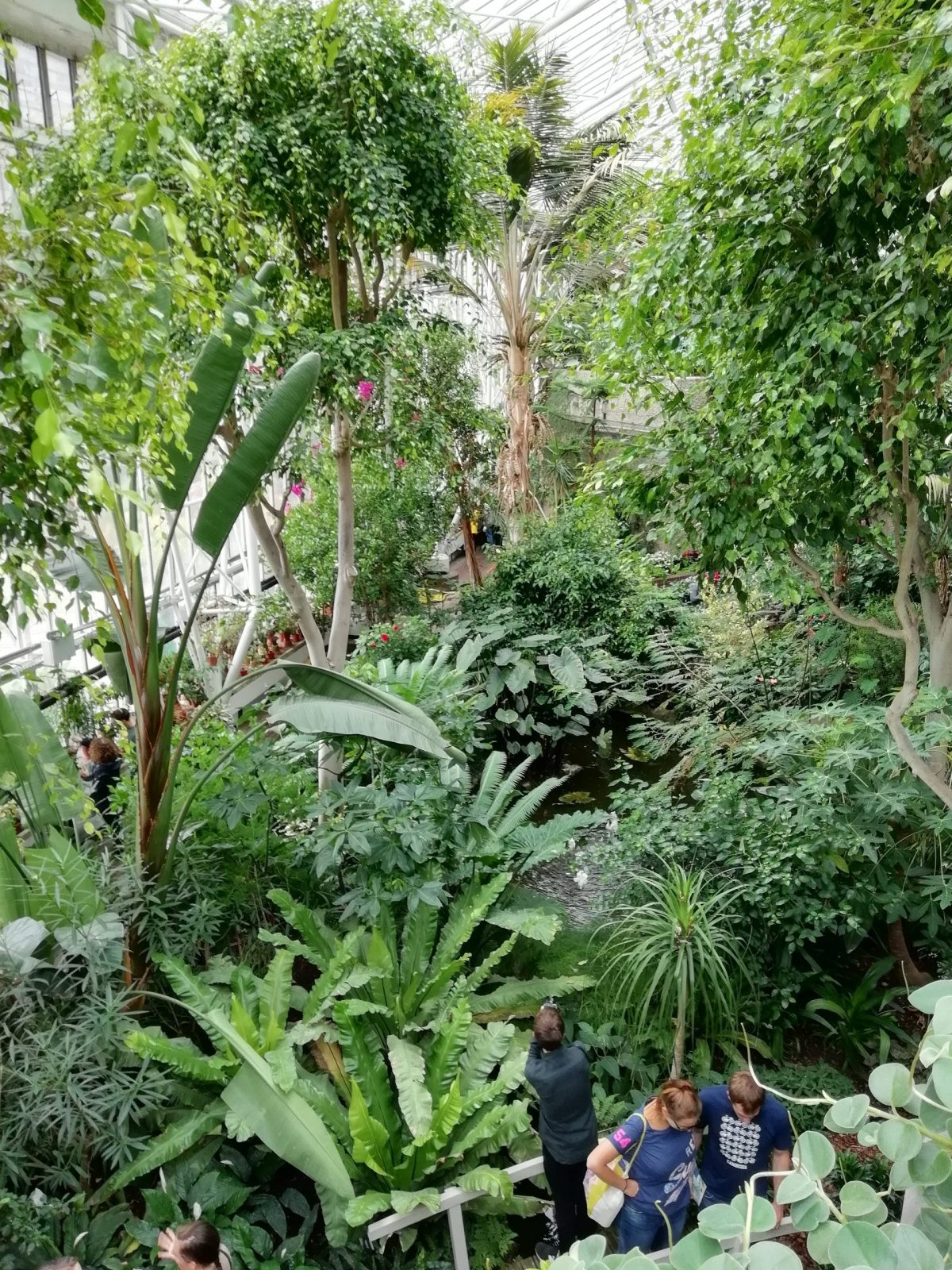 Visiting Barbican Conservatory: Photo Gallery 8