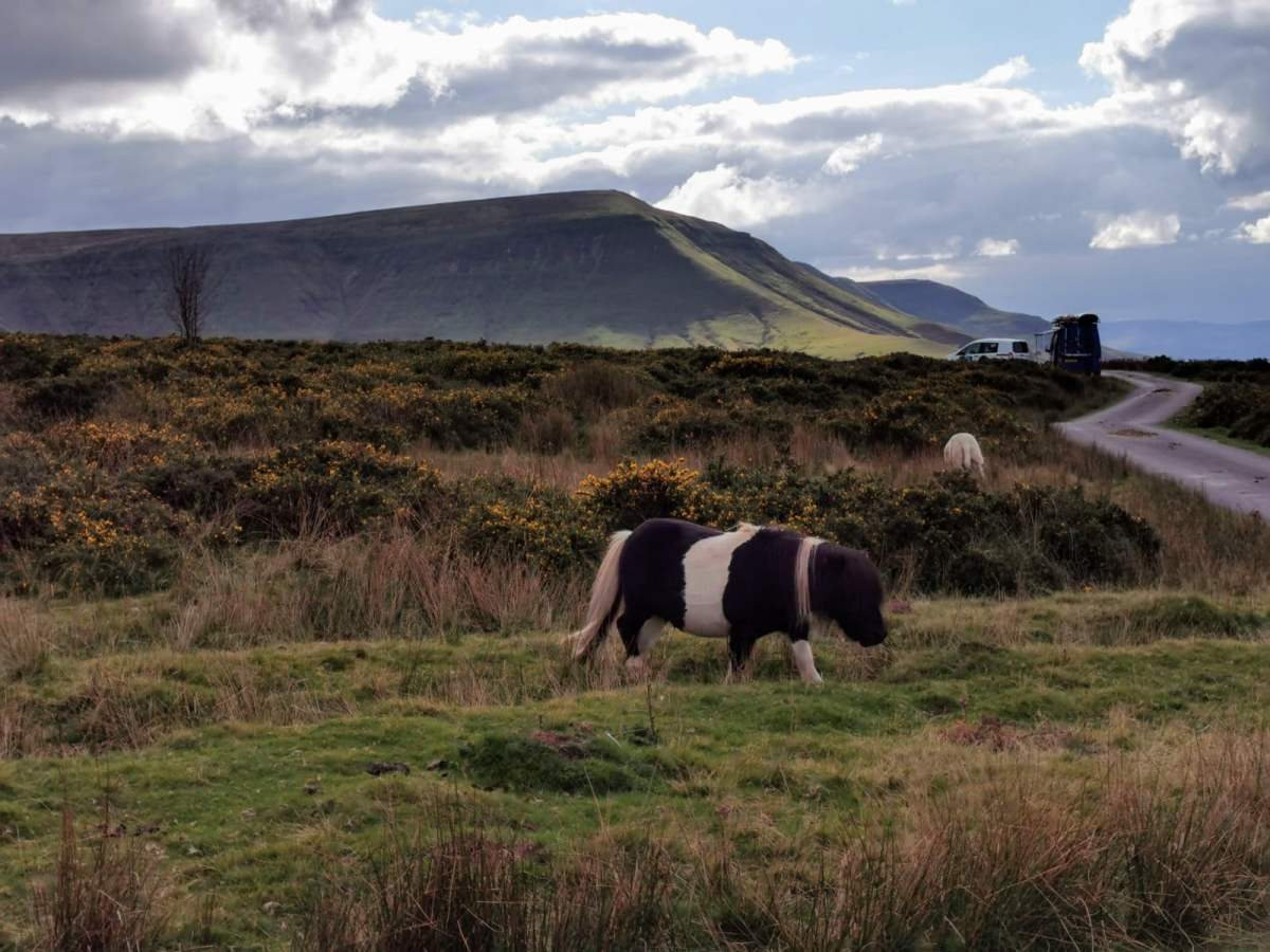 Tiny Horses on Hay Bluff! 10