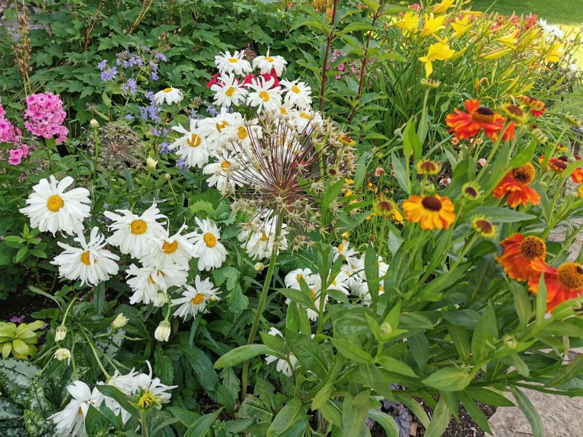 Bateman's Garden: A Kaleidoscope of Colours at Rudyard Kipling's National Trust Home 10