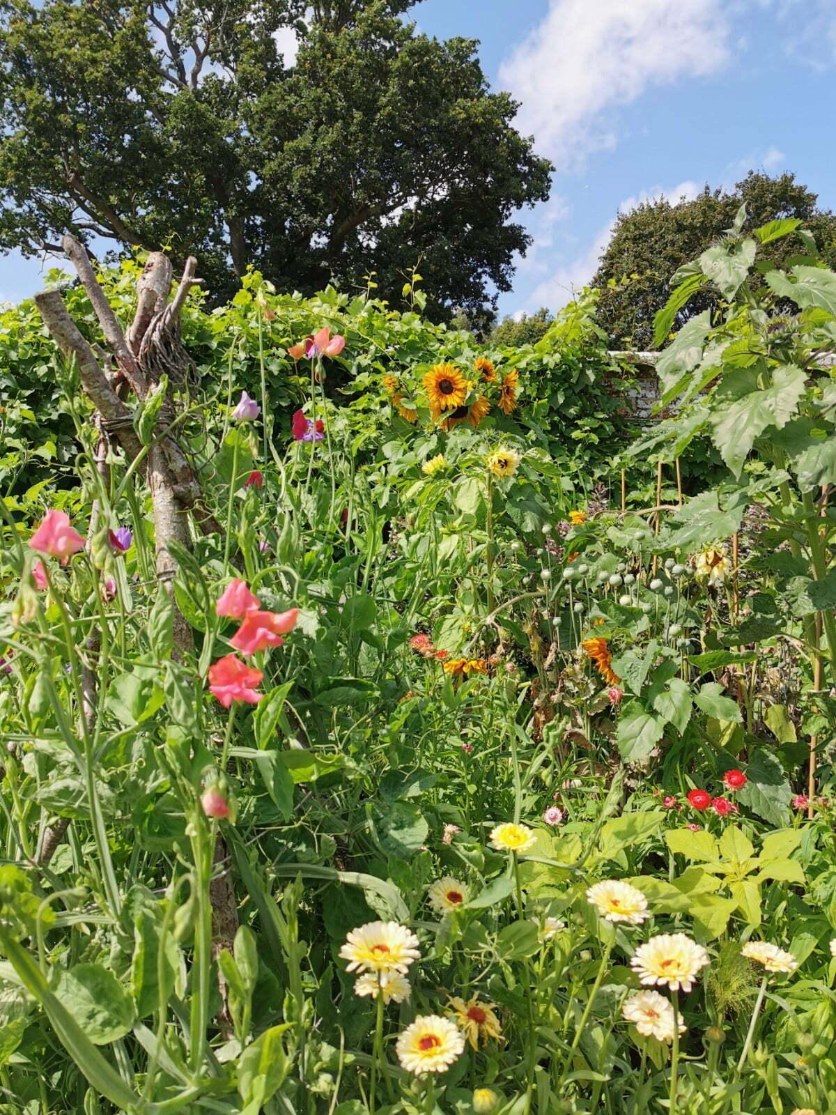Bateman's Garden: A Kaleidoscope of Colours at Rudyard Kipling's National Trust Home 13