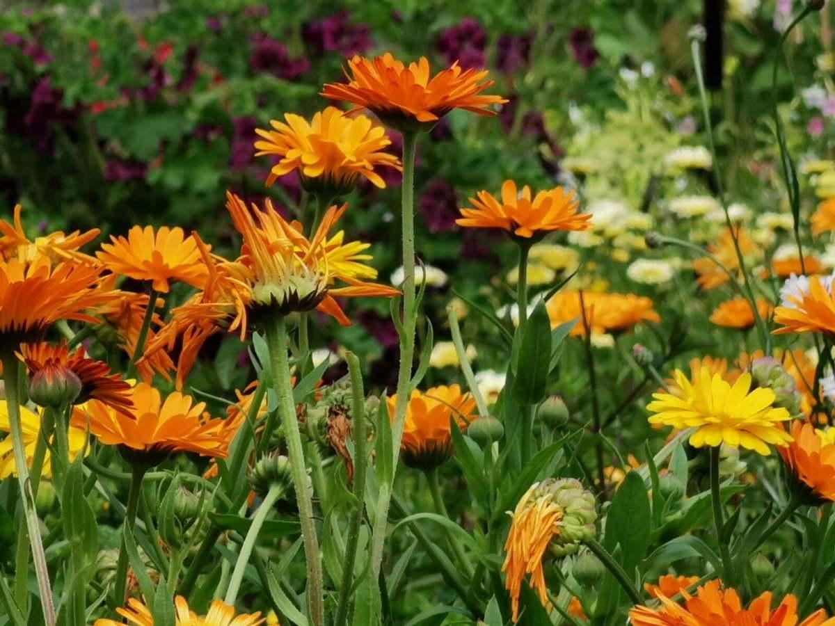 Bateman's Garden: A Kaleidoscope of Colours at Rudyard Kipling's National Trust Home 7