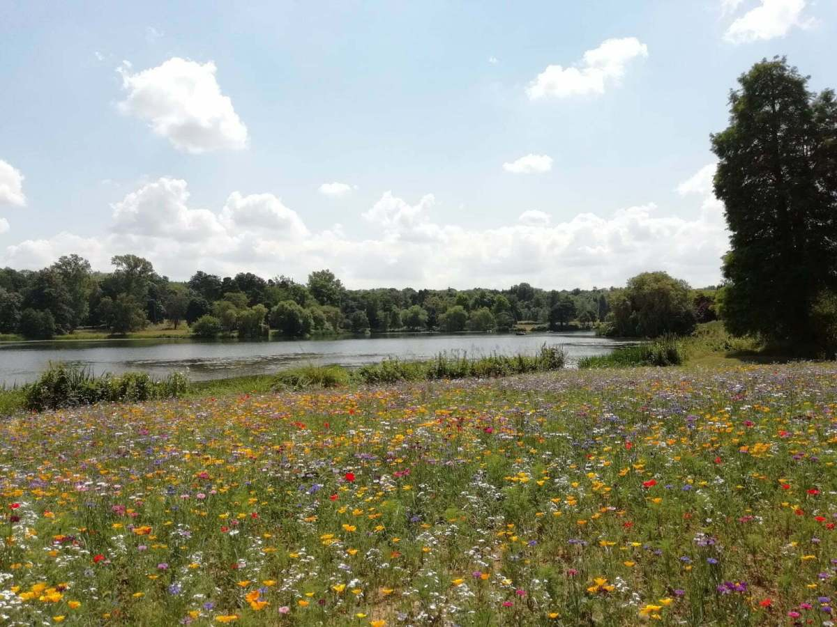 Best Things to See and Do at Hever Castle & Gardens: In Photos 3