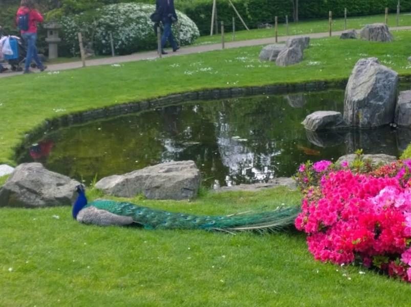 Kyoto Garden in Photos: A Secret Japanese Garden in Holland Park 16