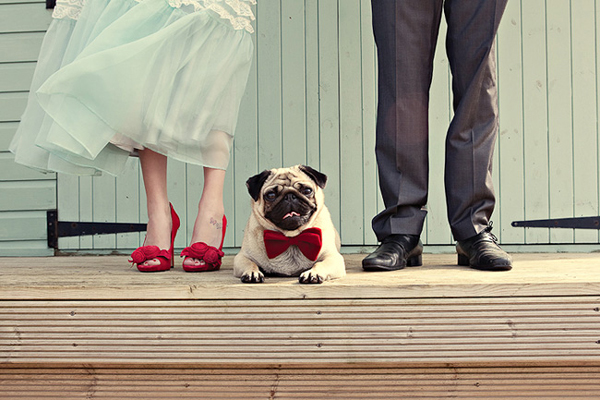 pug-bowtie-wedding
