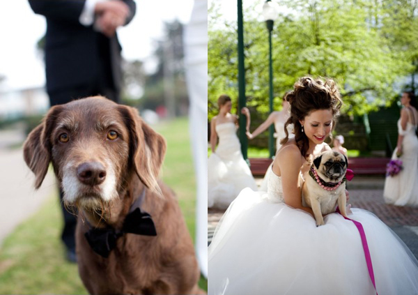 wedding-puppies