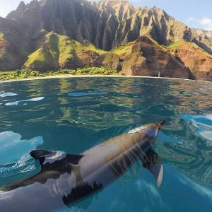 dolphin, ocean, Hawaii, animal communicator