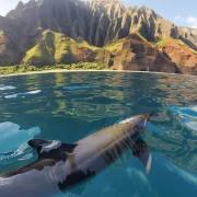 dolphin, ocean, Hawaii, animal communicator