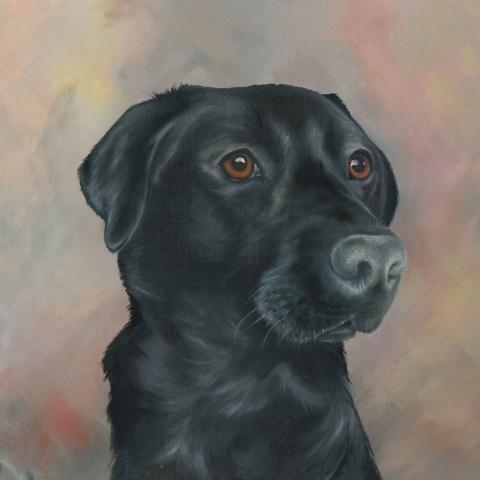 Portrait of a black Labrador in oils