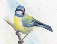 Blue tit (card)
