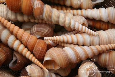 Turret Shells