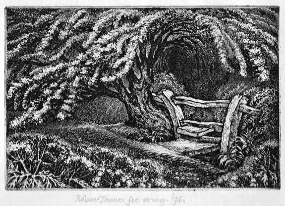 Robin Tanner | The Old Thorn | Etching | Elizabeth Harvey-Lee