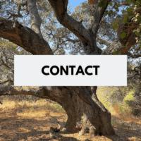contact button (2)