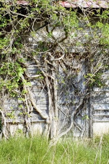 Door of Mystery 0507