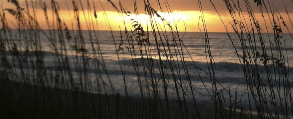 sunset-grass-1200-crop