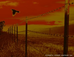 Crow Fly Blur