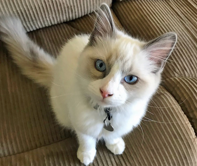 Weird Experience Neutering Our Kitten at Bradshaw Animal Hospital
