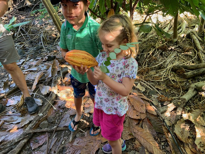 Chocolate Tour at Kokoleka Lani Cacao Farm in Kona