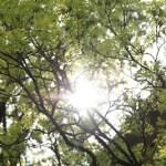 bomenlicht