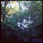 bloggen in de tuin