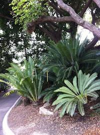 san diego zoo beplanting