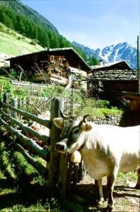 Suedtirol Bauernhof (1)