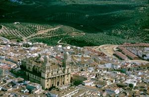 Jaen Olivenhaine Kathedrale (1)