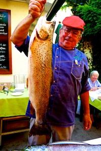 Febr. 2013. Der Wels oder Waller, zoologisch Silurus glanis genannt, ist die größte und die geheimnisvollste Süßwasserfischart.