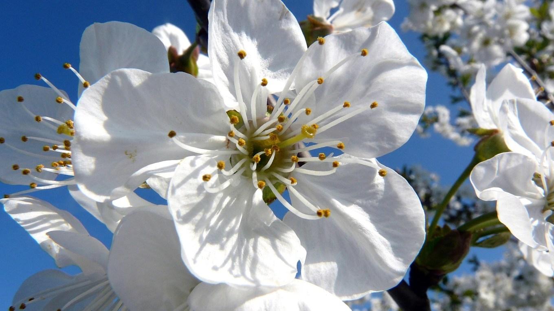 Fantasiereise und Atemübung im Frühling