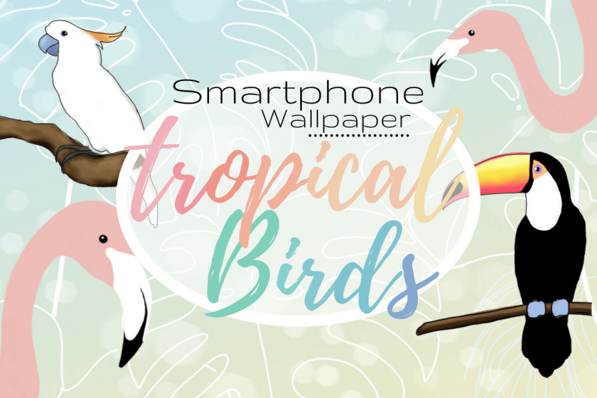 gratis wallpaper tropische vögel tropical birds flamingo tukan papagei kakadu cacadoo