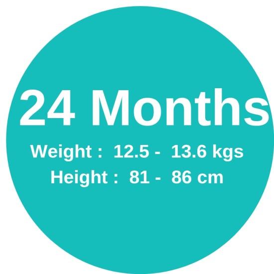 24m (12.4-13.6kgs)