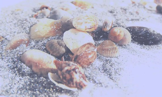 tiny shells