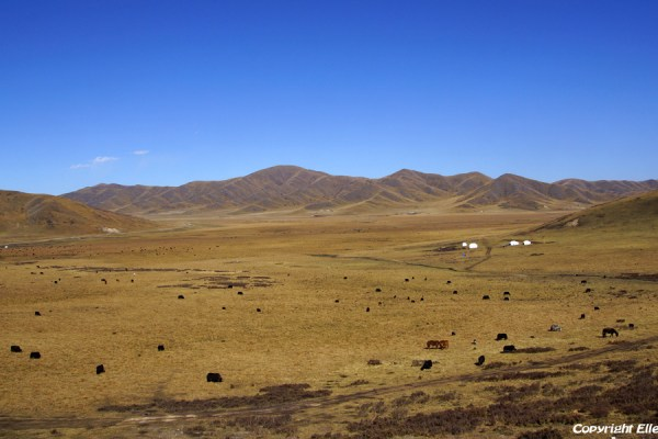 From Tangke to Zoige: vast grasslands with nomads and yaks