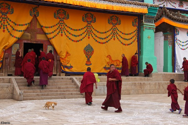 Monks are gathering at the assembly hall of Wutun Monastery, Rebkong (Tongren)