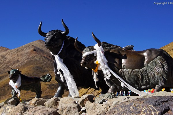 Statues of yaks at the Pa La pass (5,031meters)
