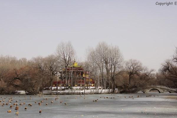 Lhasa, The Lukhang (Naga temple) in the lake behind the Potala Palace