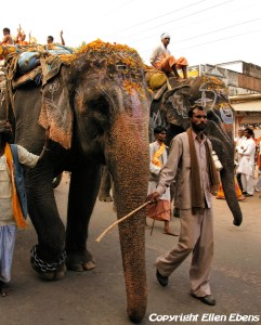 A religious procession with elephants in a small town in India