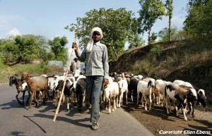 Semi-nomads on their way with their cattle