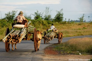 On the road from Kyaikto to Bago: local transport of bamboo trunks