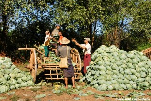 On the road from Kalaw to Pindaya, farming activity