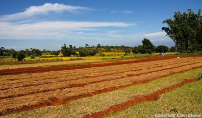 Colourful fields on the road from Kakku to Inle Lake