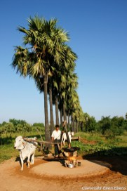 On road from Bagan to Mount Popa, coconut oil pressing
