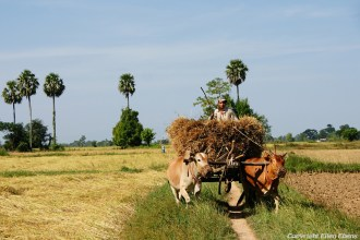 The countryside near Pyay